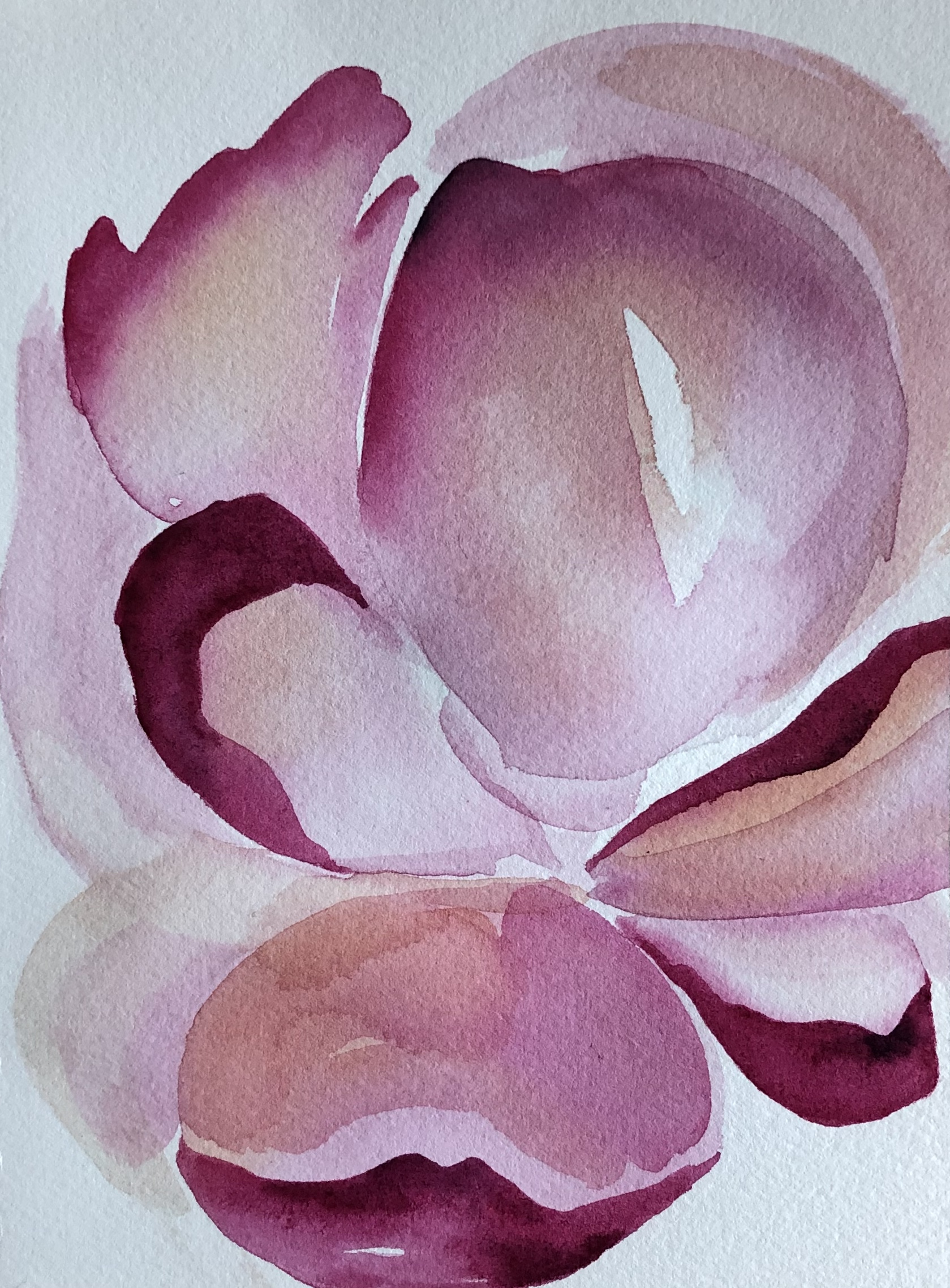magnolia | sold