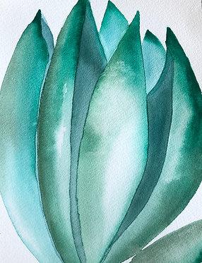 agave | 8 x 10