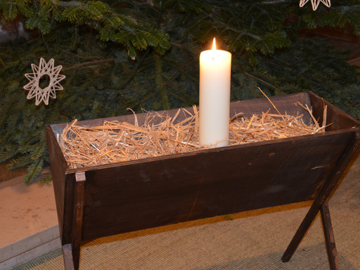 Bo und der Weihnachtsstern - eine Berufungsgeschichte