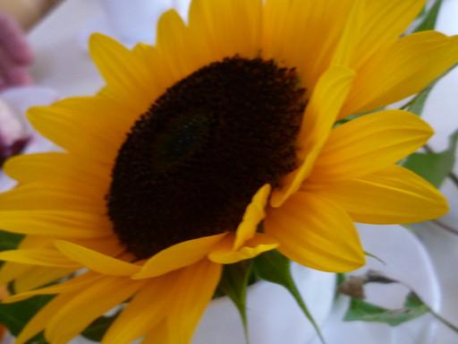 Jungfrauenweihe und Witwenweihe - Berufungen für die heutige Zeit