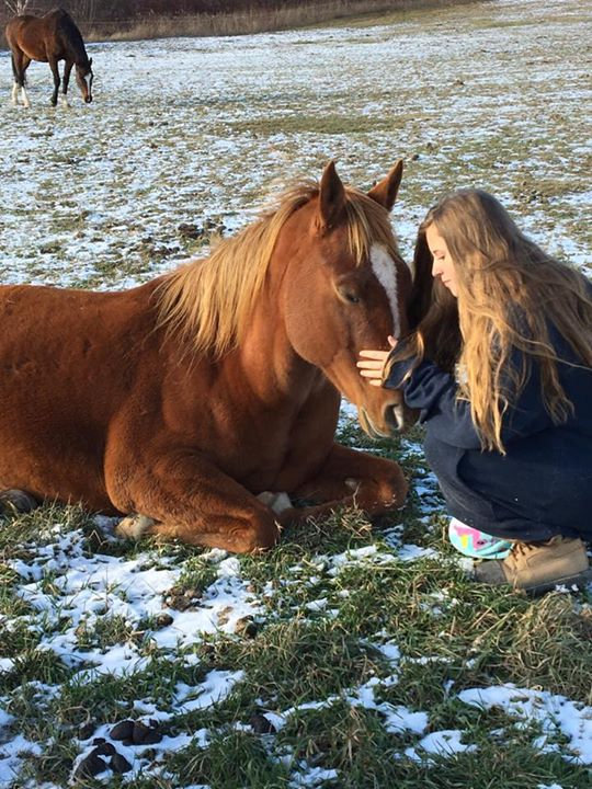 Equine Guided Coaching package