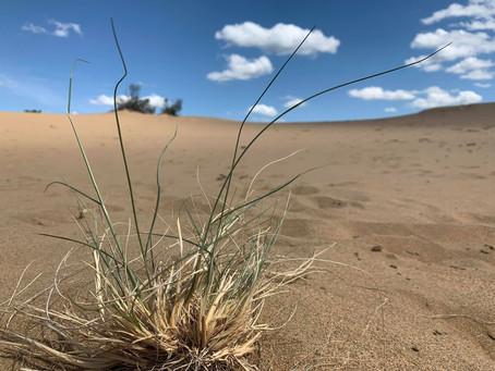 """Send Dunes"""