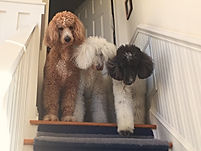 John's Dogs