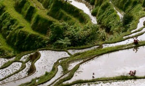 banaue-rice-terraces_edited.jpg