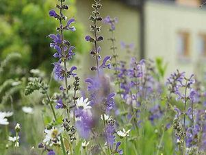 AUSGEBUCHT | Biodiversität – aus Rasen wird Naturwiese