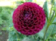 Plumb Ivanetti (Ball).jpg