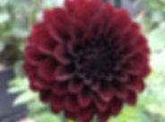 Burgundy Black Satin (Ball).jpg