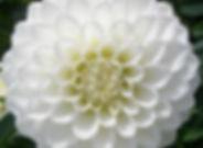 White SnowCap (Ball).jpg