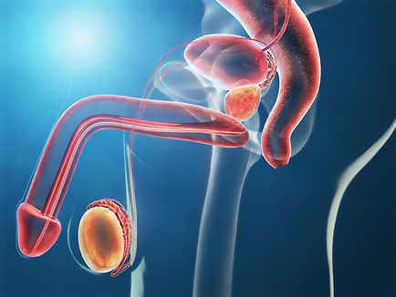 Prostate cancer symptoms and early prostate cancer diagnosis
