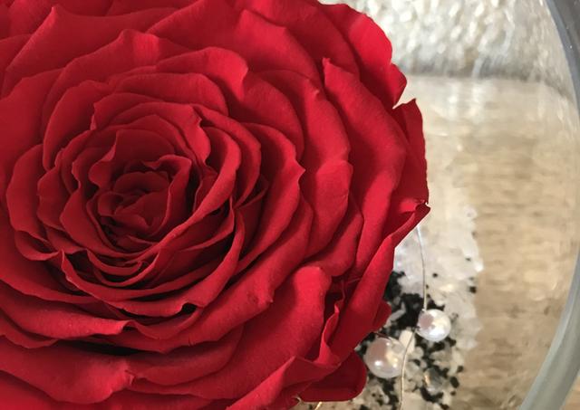 """Rose éternelle géante """"Rouge"""""""