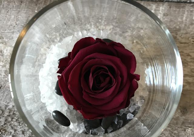 "Rose éternelle ""Aubergine"""