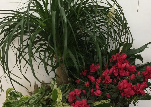 Jardin de plantes #3