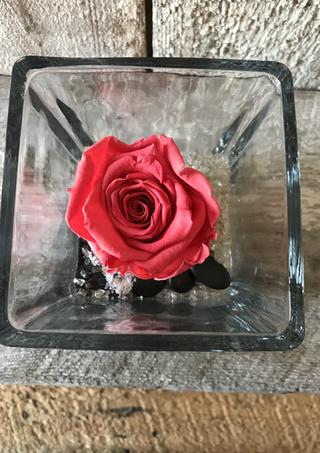 """Rose éternelle """"Corail"""""""