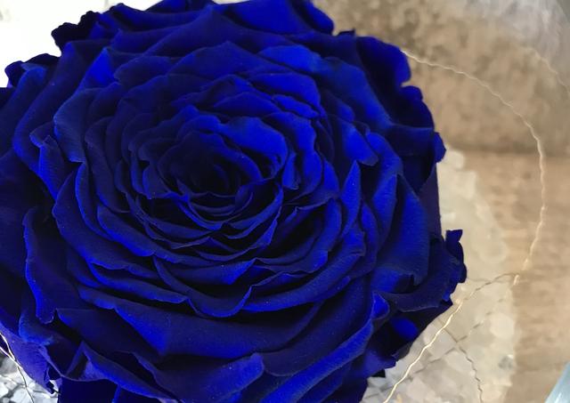 """Rose éternelle géante """"Bleu royal"""""""