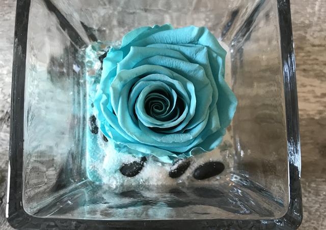 "Rose éternelle ""Turquoise"""