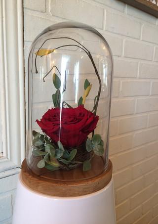 """Rose éternelle """"Rouge"""" sous cloche"""