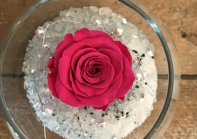 """Rose éternelle """"Fushia"""""""