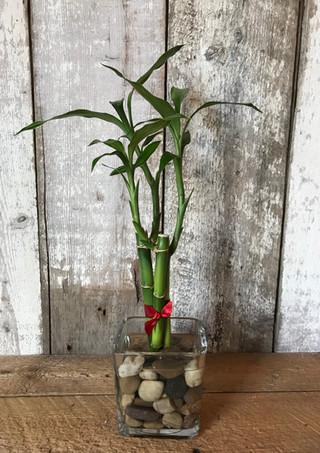Bambou Chanceux