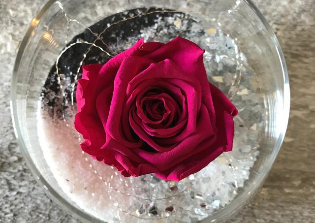 """Rose éternelle """"Fushia foncée"""""""