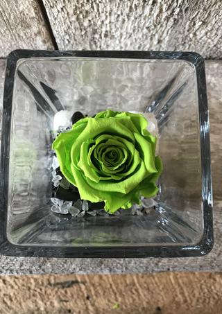 """Rose éternelle """"Verte lime"""""""