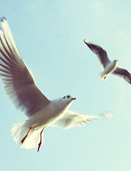 observer les oiseaux la baule