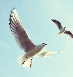 Oiseaux volants