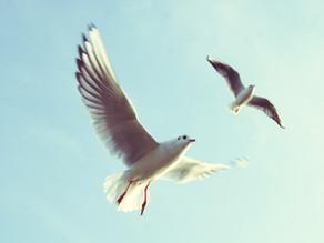 """Методики развития голоса - """"Петь, подражая птицам!"""""""