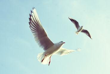 Vögel Tauben weiß