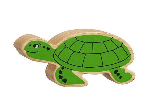 Crwban Gwyrdd /Green Turtle
