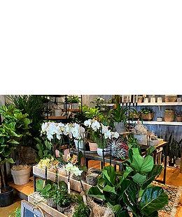 petals-boutique.jpg
