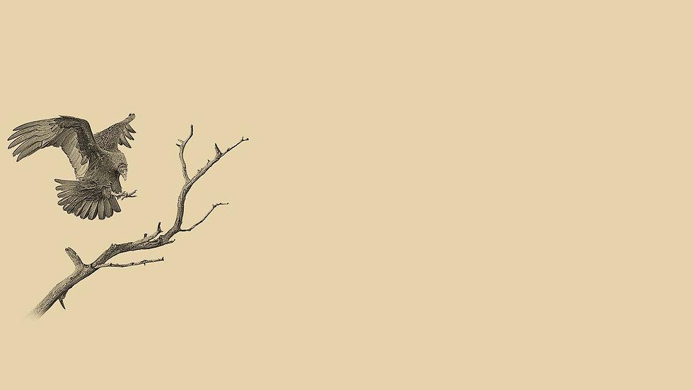 buzzard-background3.jpg