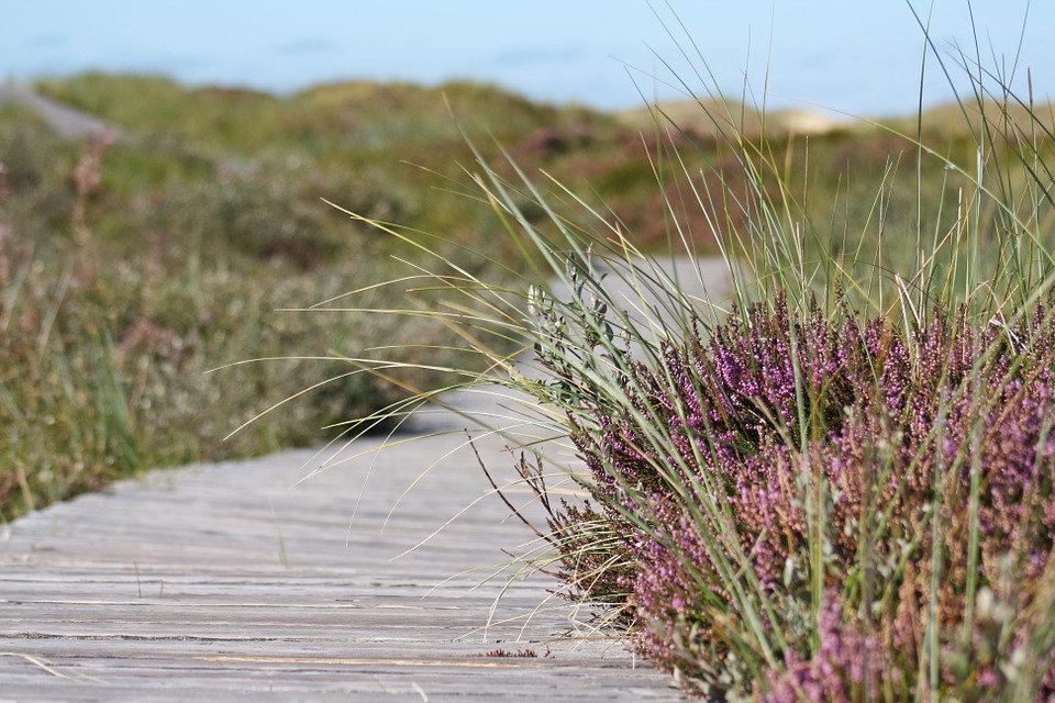boardwalk-537113_960_720.jpg