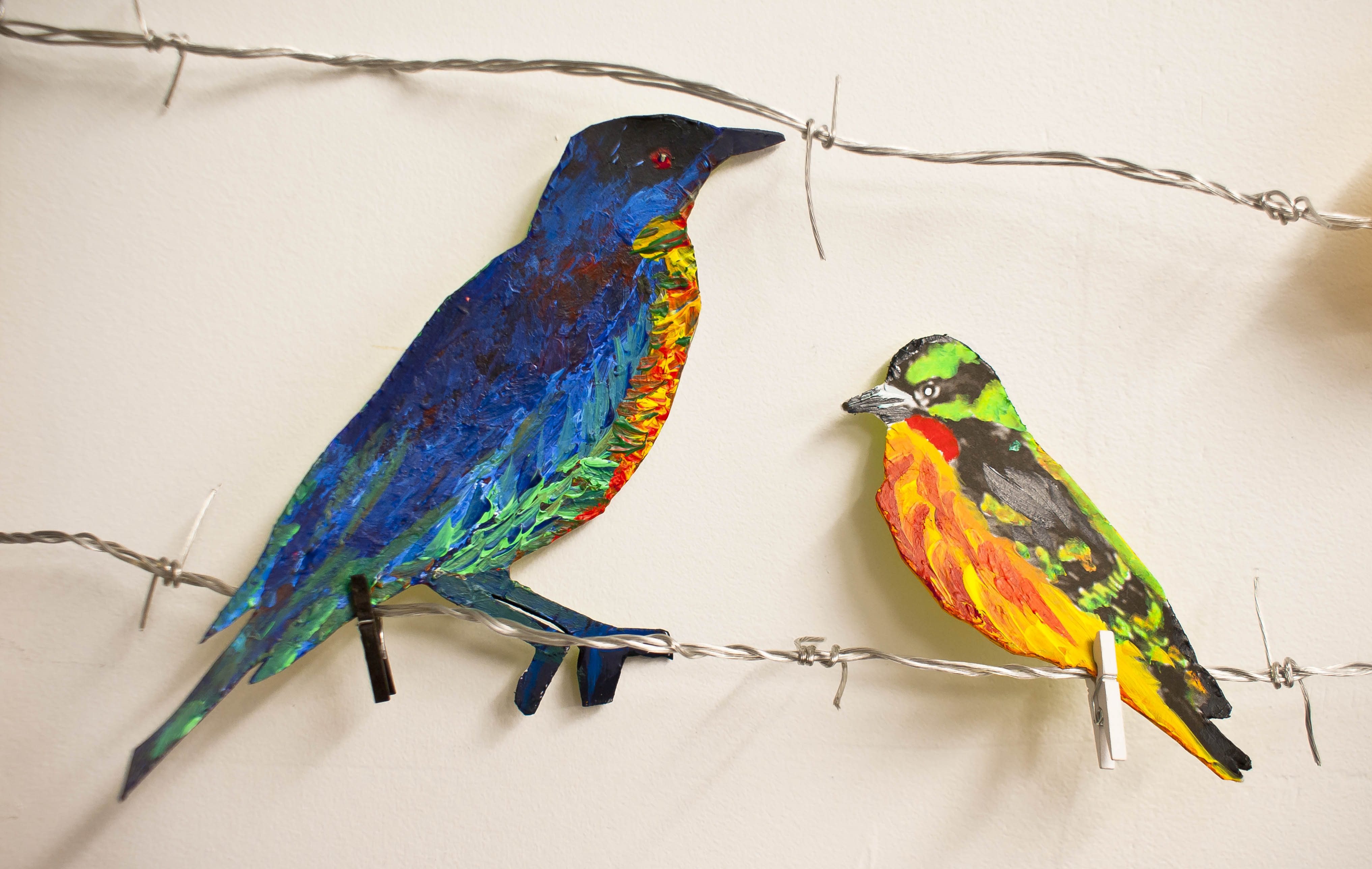 Birds with Pops of Color