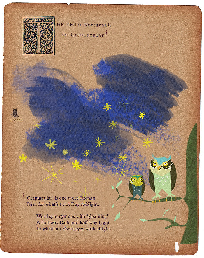 The Owl is Nocturnal