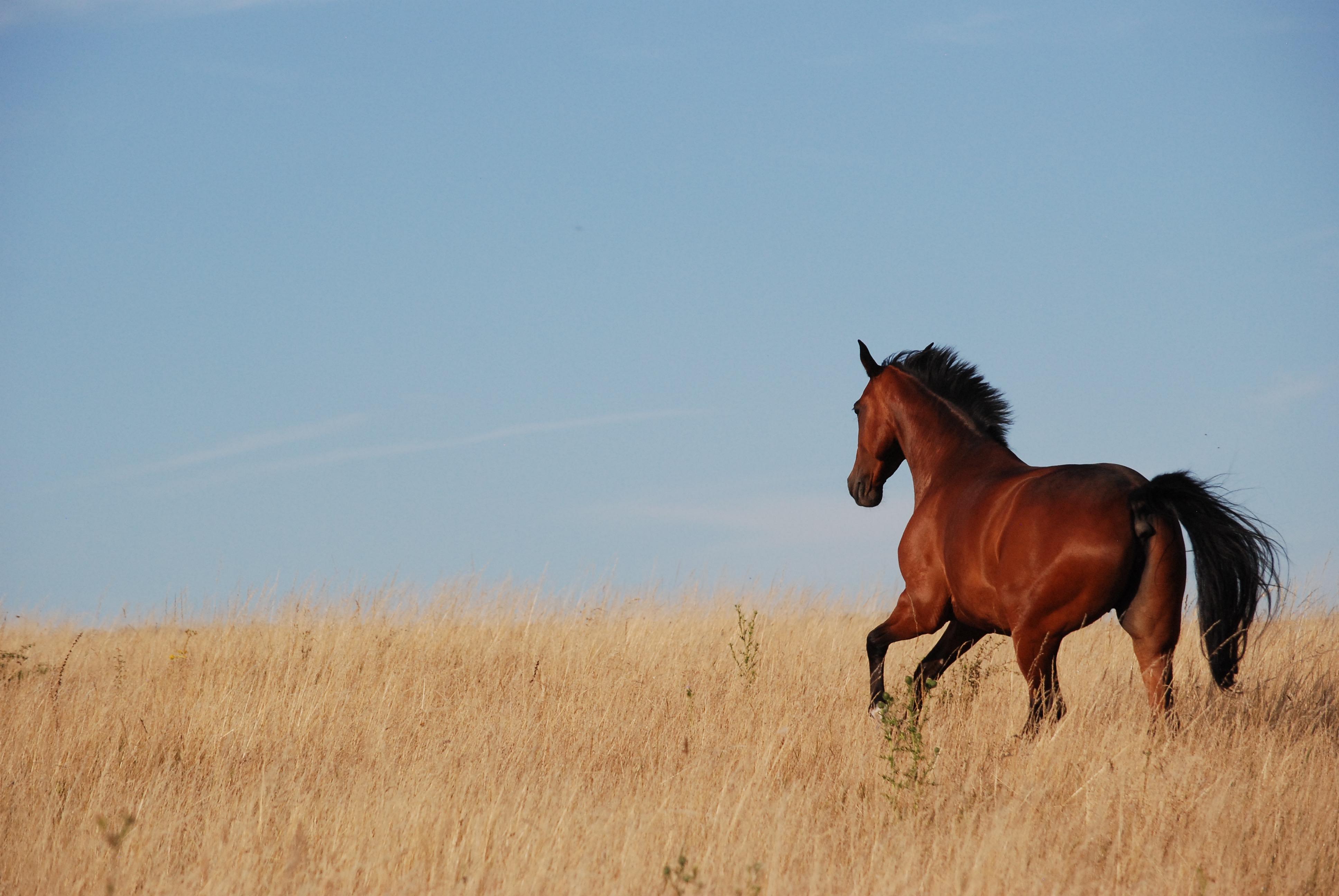 Ecuries des Eiders - chevaux au pré