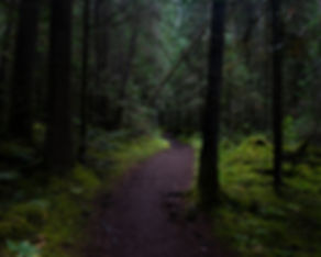 Trail 3_edited.jpg