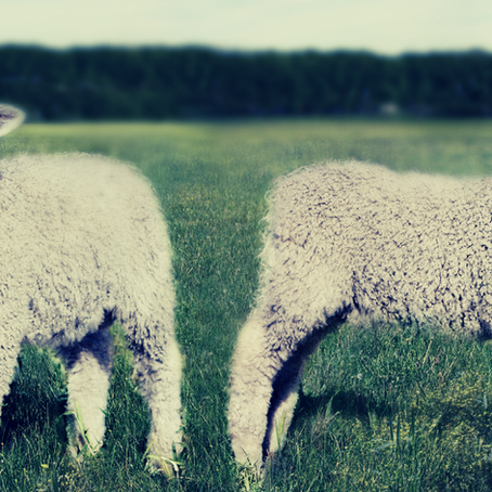 What It Means to Slaughter the Passover Lamb & Be Set Free