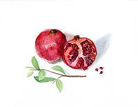 Pomegranate190 copy.jpg