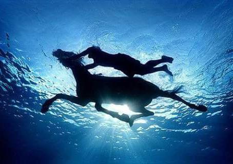 Ogni cavallo è un Maestro