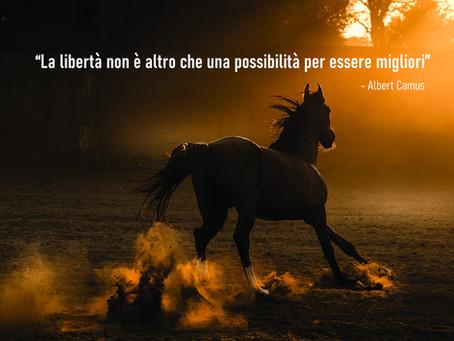 """Il """"no"""" di un cavallo: un test sulla nostra vita..."""