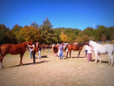 Un cavallo agitato in nostra presenza: e se dipendesse anche da noi?