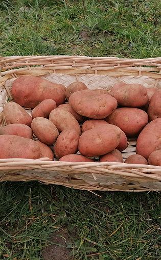 promo d hiver  pomme de terre  rouge franceline x 20 kg