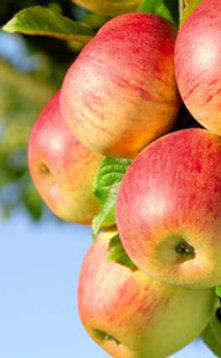 pommes jonagold  x 3 kg