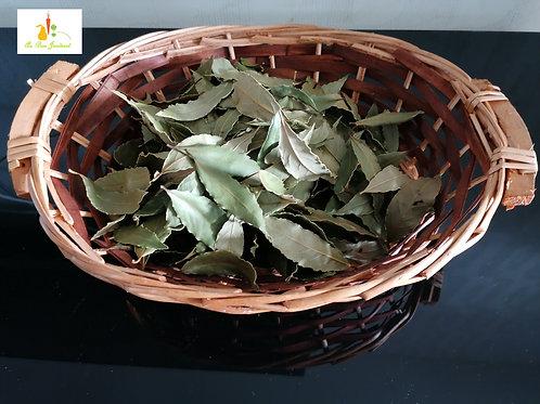 laurier sauce entre 60 et 70 feuilles