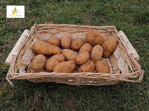 pomme de terre NOUVELLE binjte x 1kg