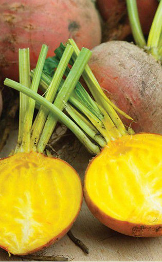 betteraves crues golden orange