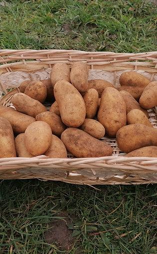 promo d hiver Pommes de terre amandine x 30 kg