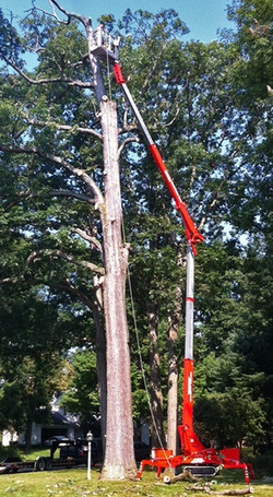 Teupen tracked lift extending to work on a tree at a great height.