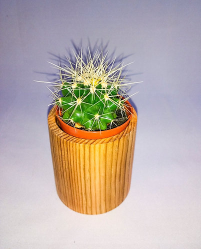 Candle/Cactus/Succulent Holder/Planter