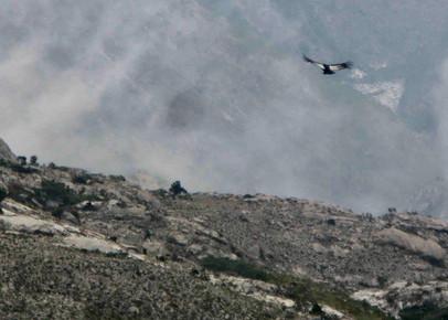 Condor 1 (1).jpg